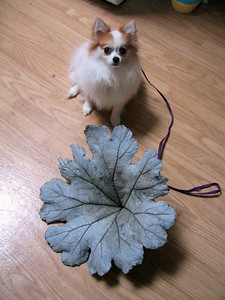 But I don't WANNA sit by the big scary leaf!!!