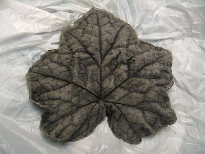 Cast Leaf #3 - Heuchera