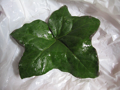 Leaf Casting #1 - English Ivy